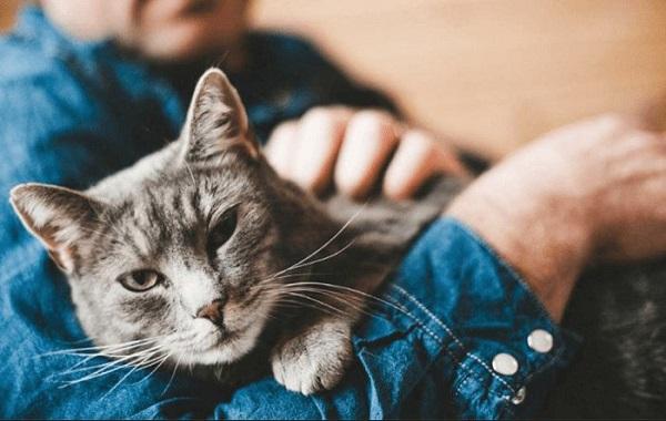 Sentuhan untuk Kucing