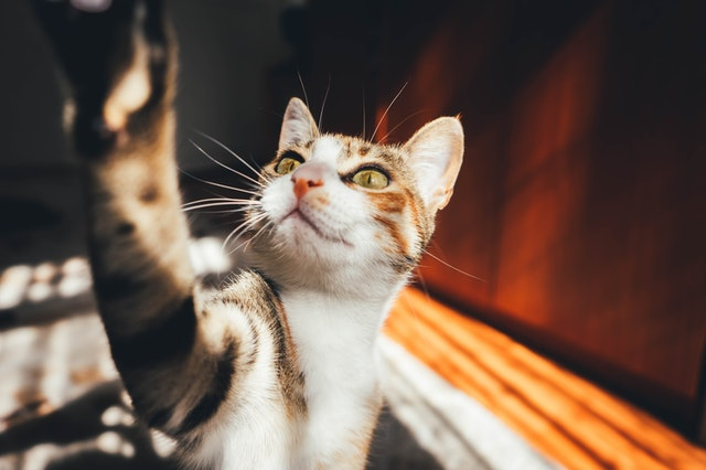 Kucing Lucu - Photo by halilibrahimctn from Pexels