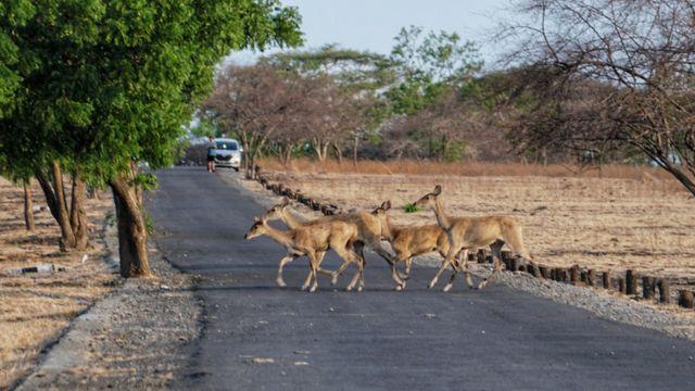 Menyusuri Taman Nasional Baluran