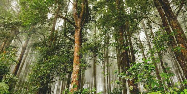 Hutan di Indonesia disebut sebagai paru-paru dunia