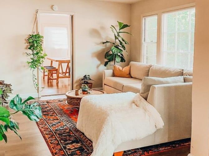 tanaman di dalam rumah