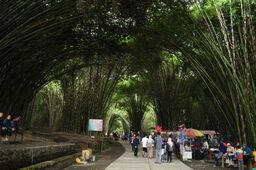 Kawasan Wisata Hutan Bambu Lumajang