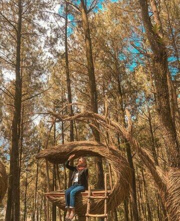 Hutan Pinus Puncak Becici by @awmeliamadhaa on Instagram