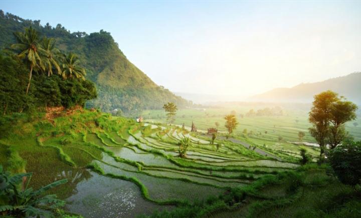 Keindahan hamparan sawah di Indonesia