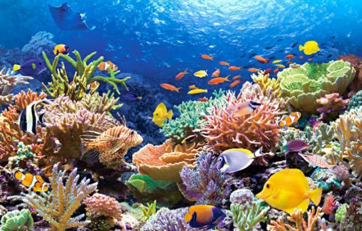 Keindahan terumbu karang di Indonesia