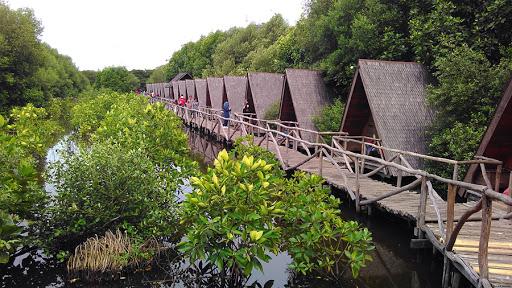 Ekowisata Mangrove (Samudranesia.com)