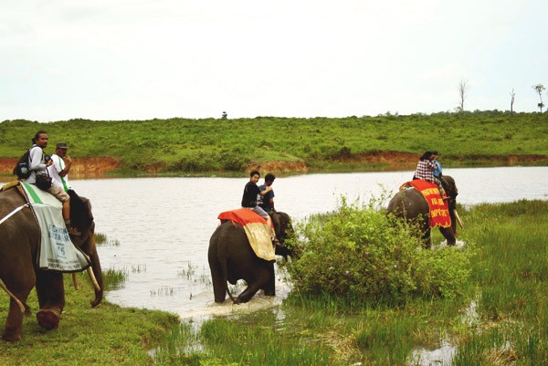 Safari Tour di Way Kambas
