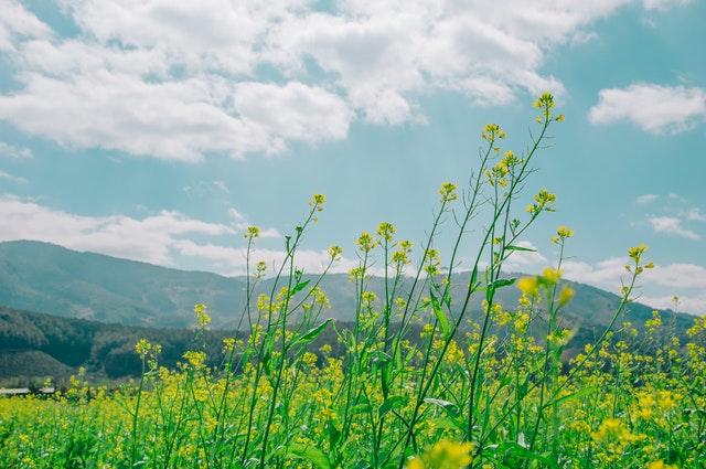 Foto oleh Min An dari Pexels