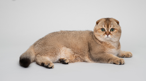 Photo by Whiskas Indonesia on Google