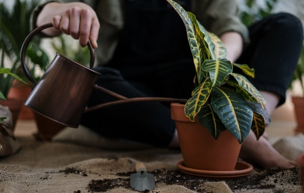 Person watering a potted plant