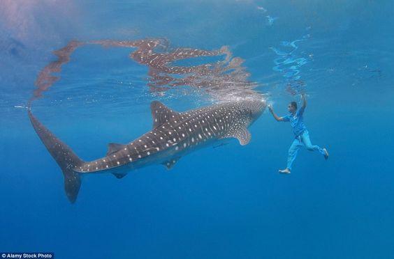 Berenang dengan Hiu (Foto by History Nerd)