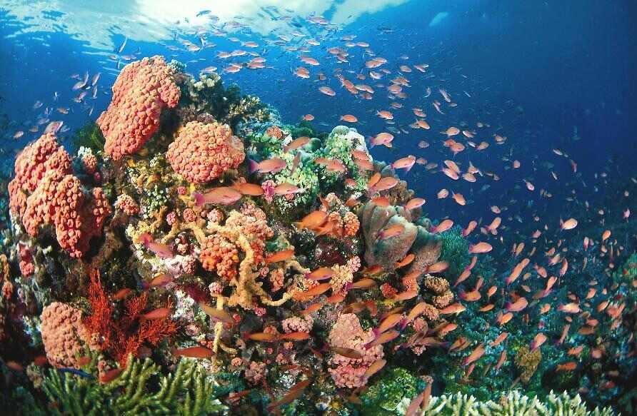 Tubbataha Reef via Pinas-Pass