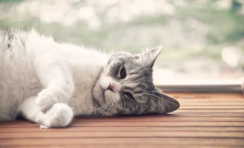 kucing kedip mata