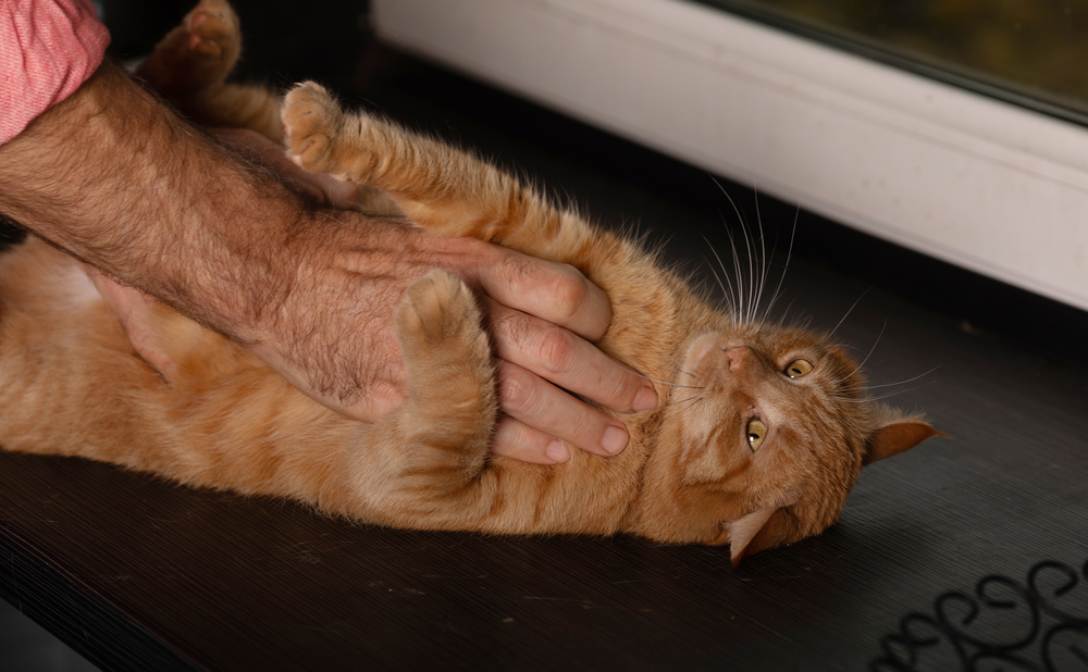 bahasa tubuh kucing