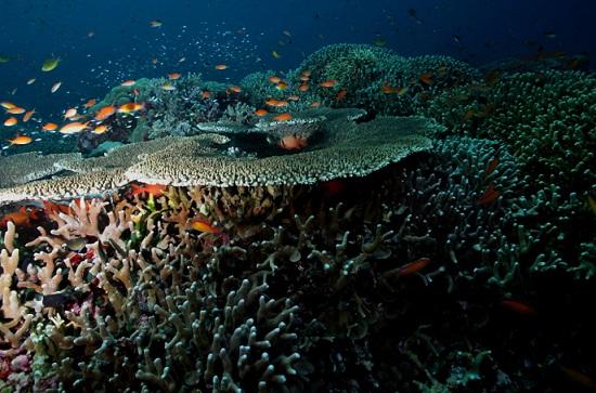 Credit: Tubbataha Reef Photo by q phia on Flickr