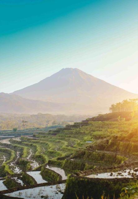 Persawahan Kajoran dengan Latar Gunung Sumbing