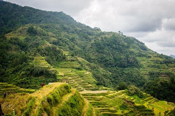 Filipina Sawah Banaue by lester56