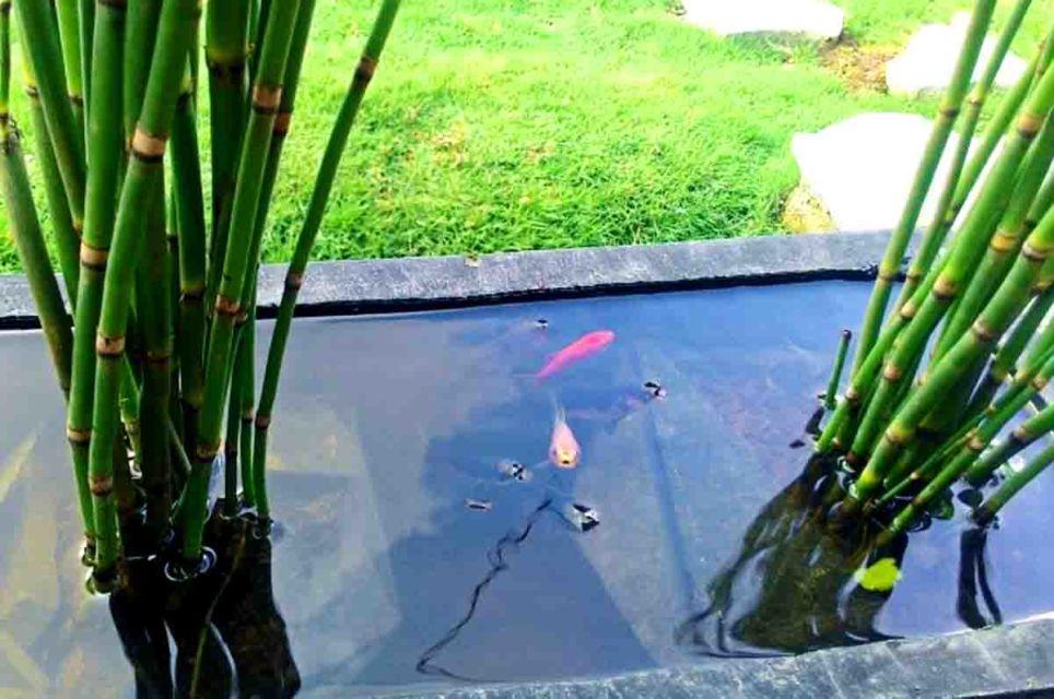 Tanaman air kolam
