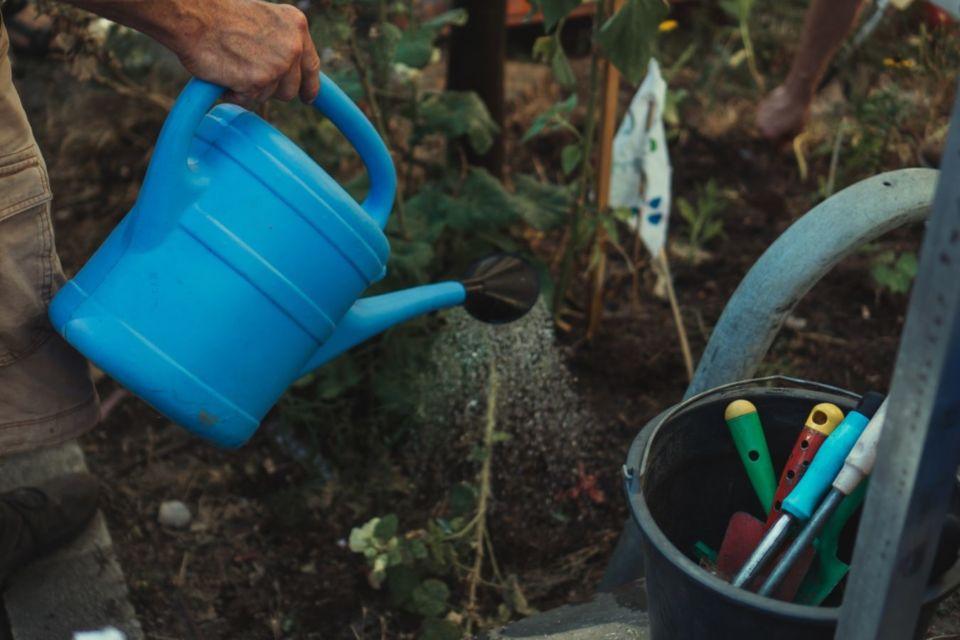 Cara menyiram tanaman untuk menghemat air