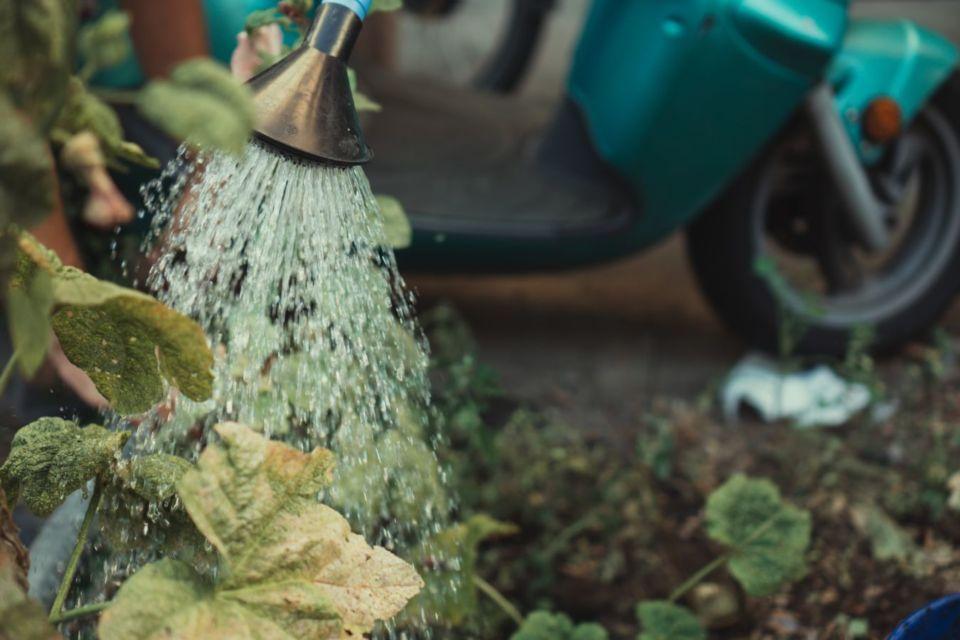 Menyiram tanaman setiap hari