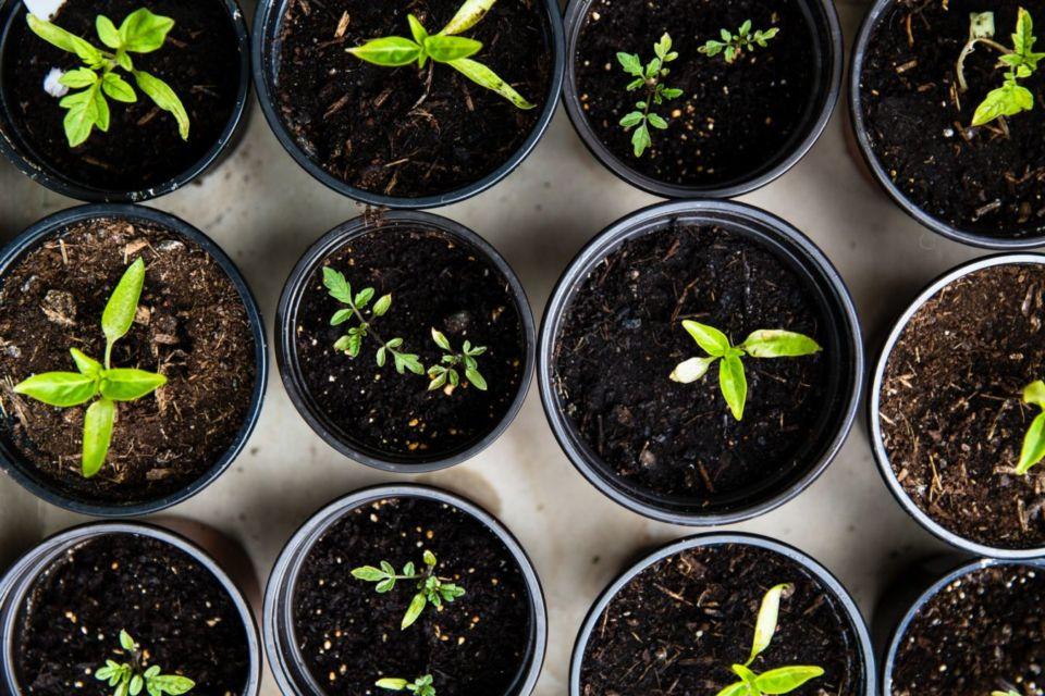 Cara menyiram tanaman agar tumbuh subur
