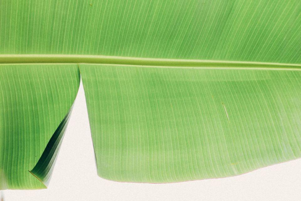 Cara membersihkan setrika dengan daun pisang
