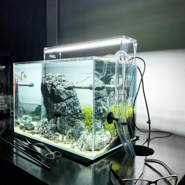 cara membuat aquascape tanpa CO2