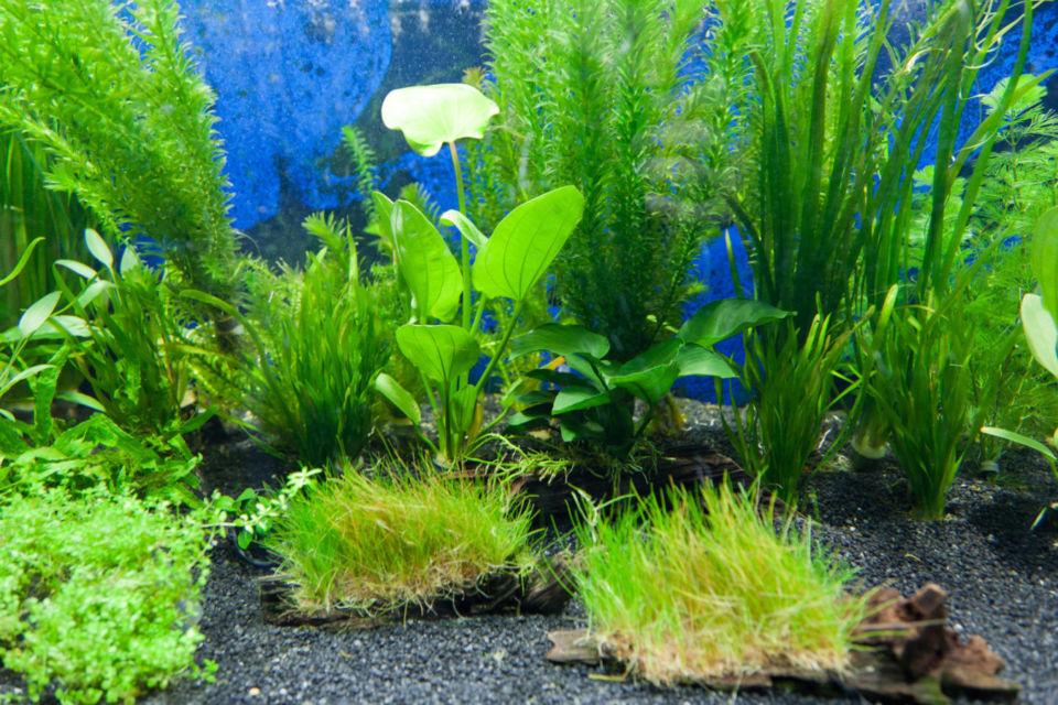 cara membuat aquascape natural