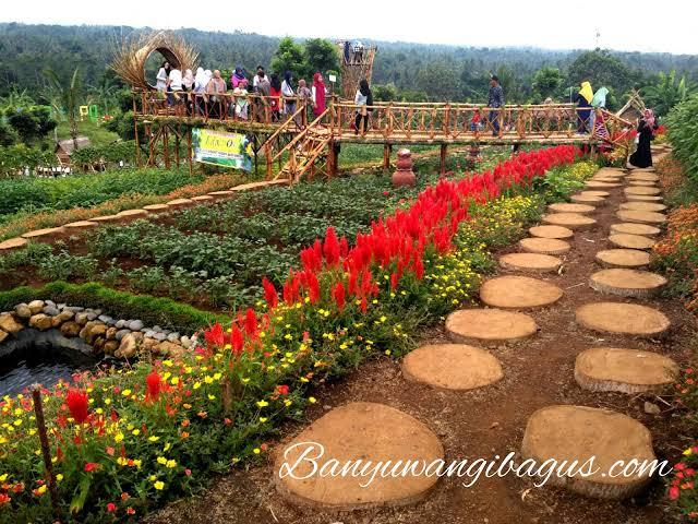 Agrowisata Taman Suruh