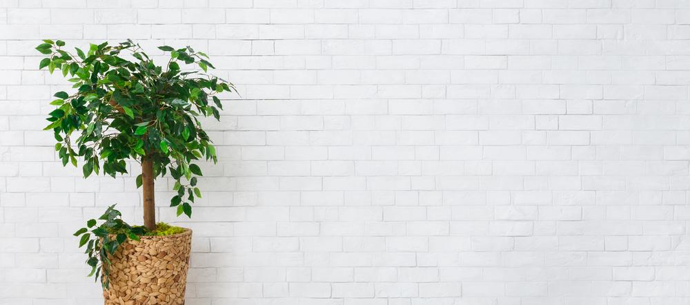 tanaman penghasil oksigen dalam air