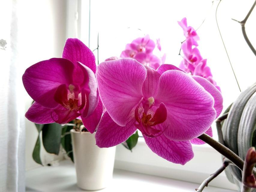 tanaman penghasil oksigen dalam ruangan