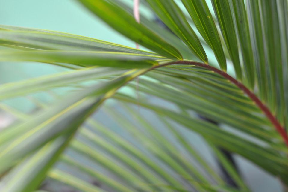tanaman penghasil oksigen terbanyak
