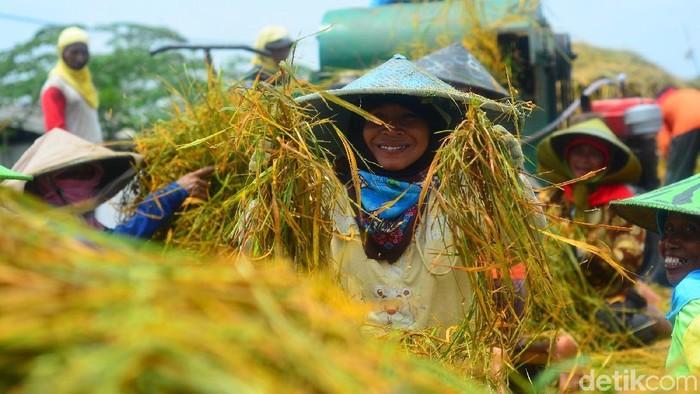 Foto oleh Eko Sujarwo dari Detik.com